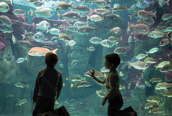 07-kids-acitivities-meli-palace-family-resort-in-greece