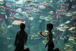 16-meli-palace-fun-around-in-cretaquarium